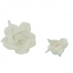 Bouton de rose blanche