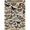 papier design vintage prédécoupé planche papillon studio light